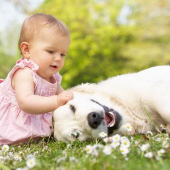 Výber vhodného psa na canisterapiu