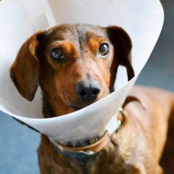 Čo môže ohroziť zdravie nášho psa? II. časť – Kožné problémy