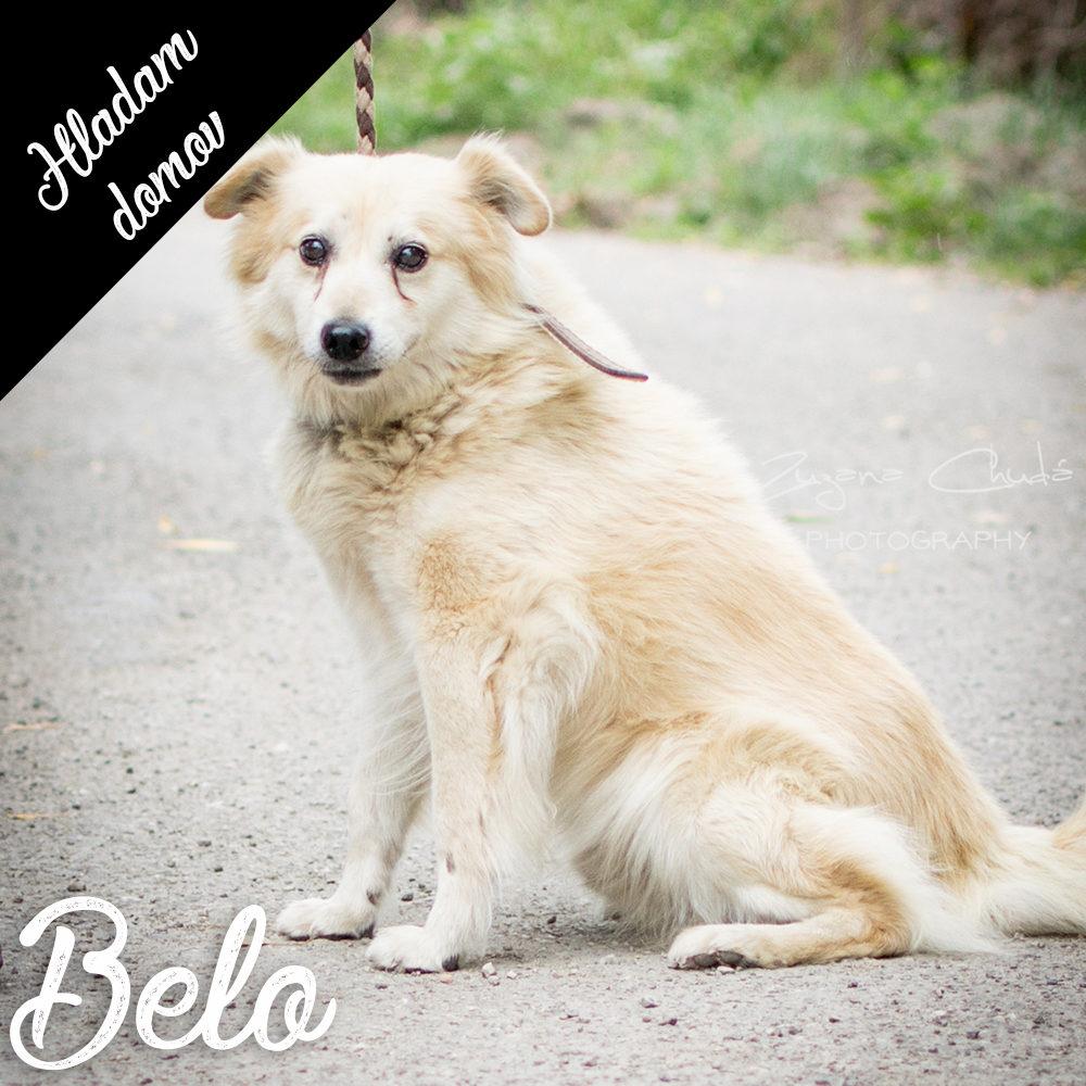 BELO – reserved