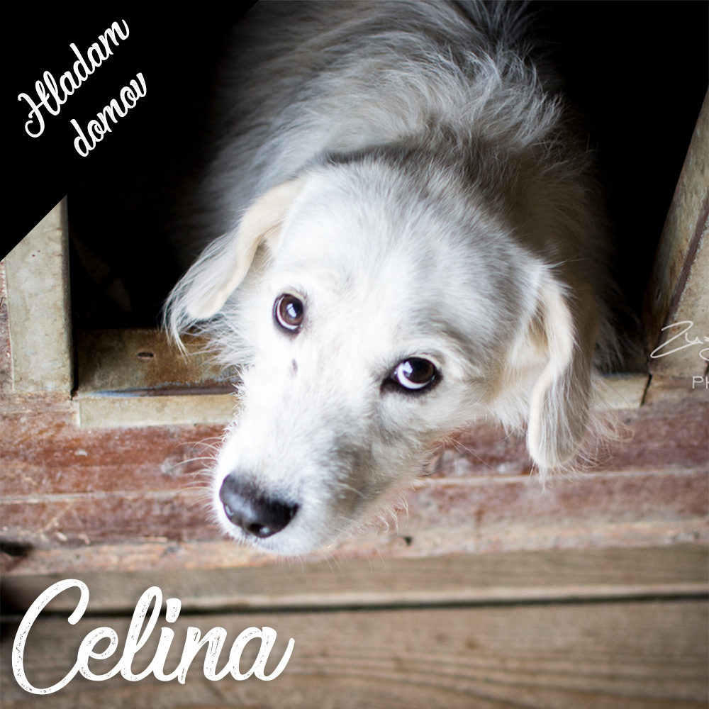 CELINA – reserved