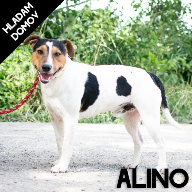 ALINO