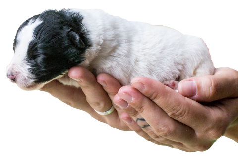 Občianskeho združenia Trenčiansky ÚTULOK sa stará o psíkov v Karanténnej  stanici Trenčín (v blízkej dobe aj o psíkov v Trenčianskom ÚTULKU). 4b7ddc8574a