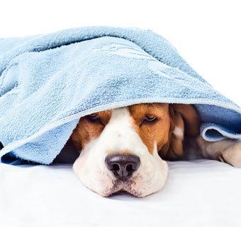 Čo môže ohroziť zdravie nášho psa? III. časť