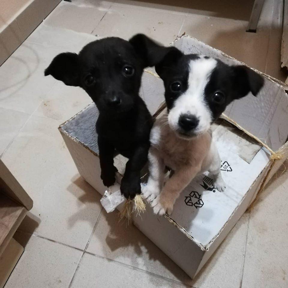 dve steniatka z krabice
